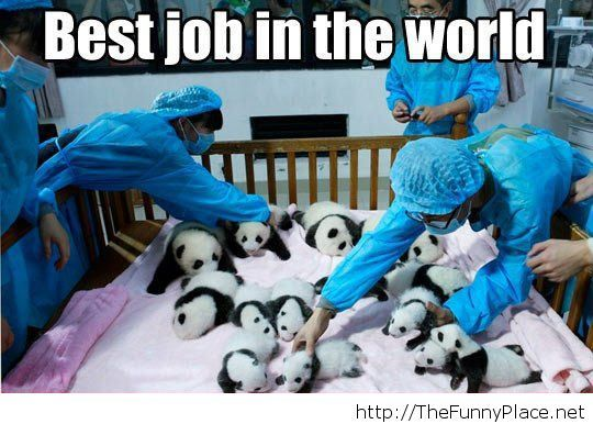 Best world job