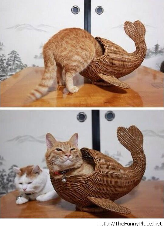 Cats are stupid!