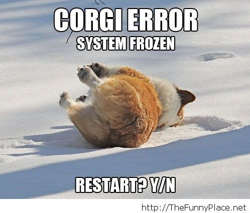 Corgi is frozen
