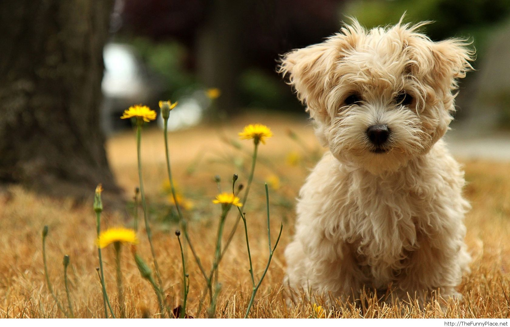 Cute dog  wallpaper HD