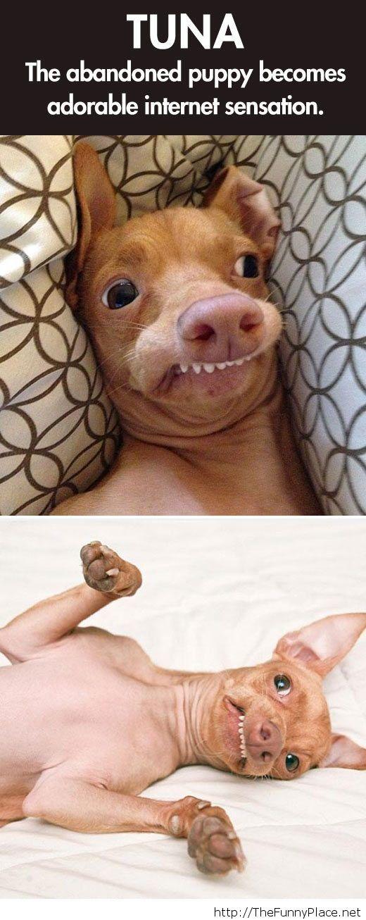 Brown dog face meme - photo#22