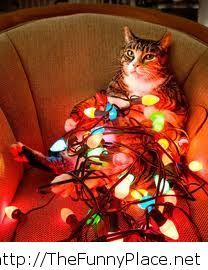 Funny christmas cat picture