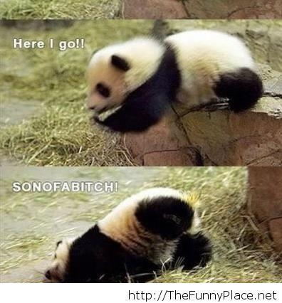 Funny panda pics