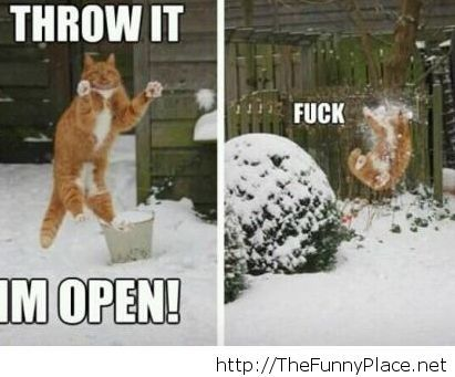 Funny winter image