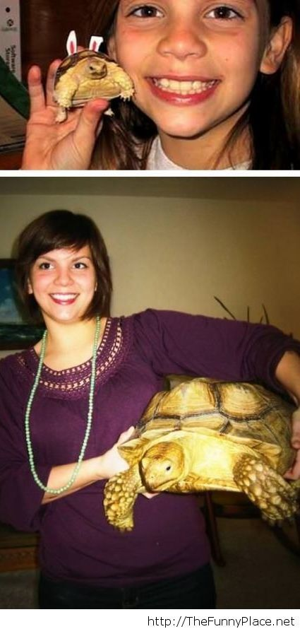 Growing up together with my turtle