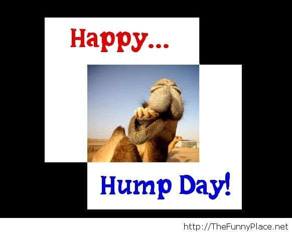 hump day – TheFunnyPlace