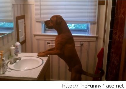 I teach my dog to watch in the mirror