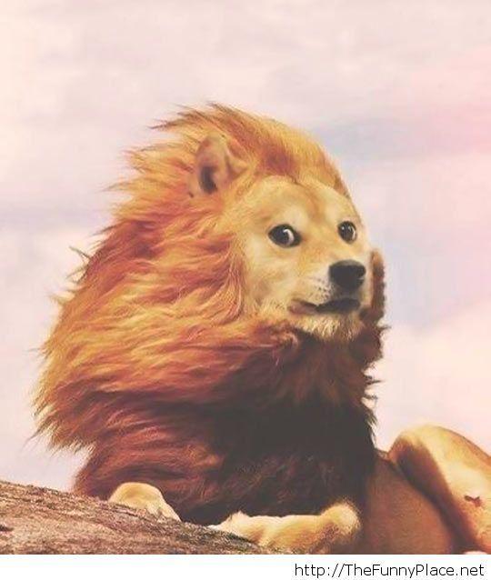Majestic dog