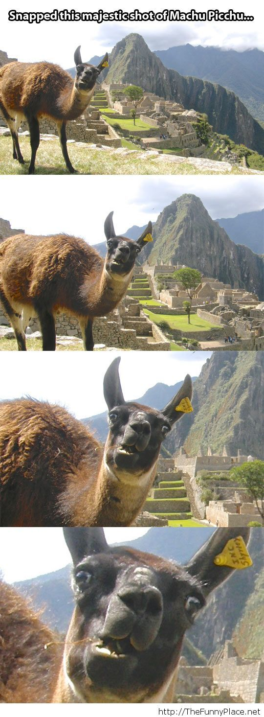 Meanwhile in Machu Picchu