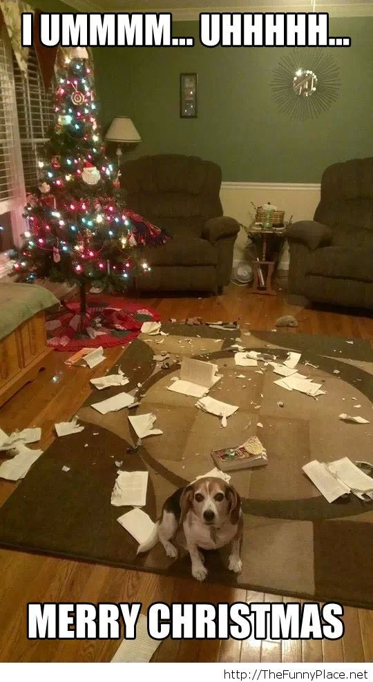 Merry Christmas funny picture with a dog