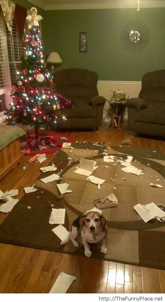 Merry Christmas with my dog