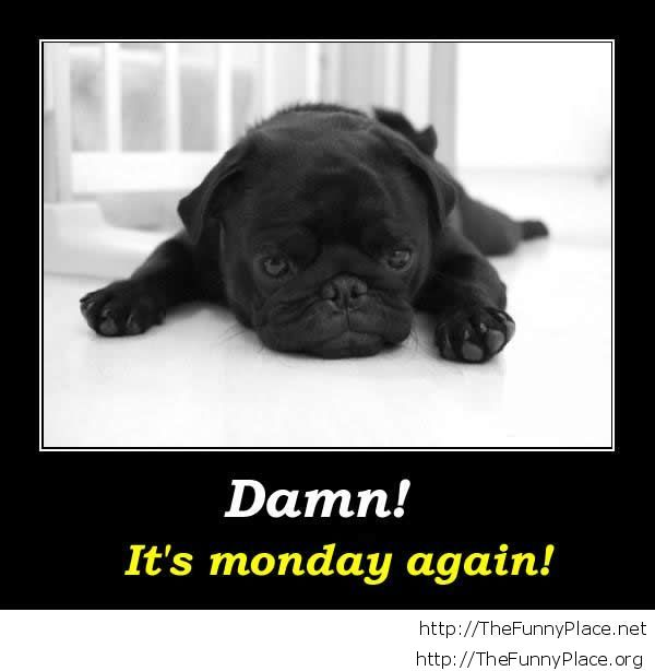 Monday again demotivational