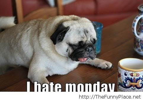Monday is gone, but I hate monday
