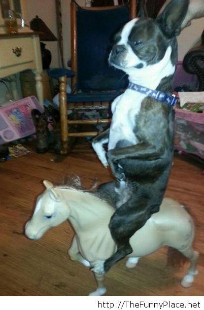 My dog is crazy
