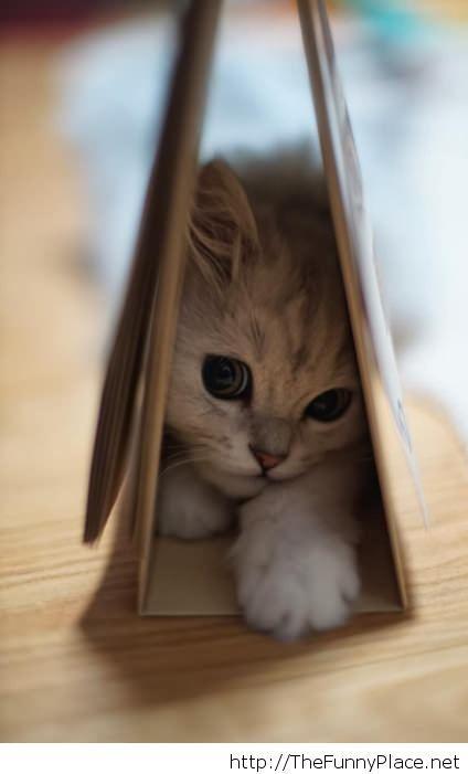 My sweet little kitty