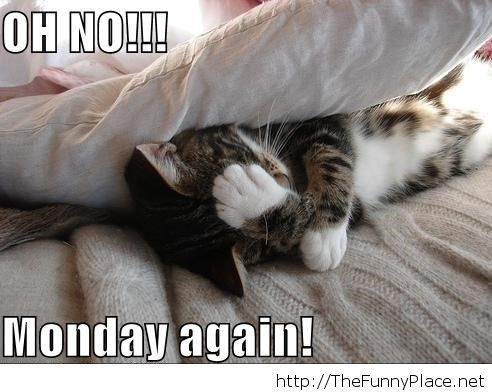 Oh no monday again picture