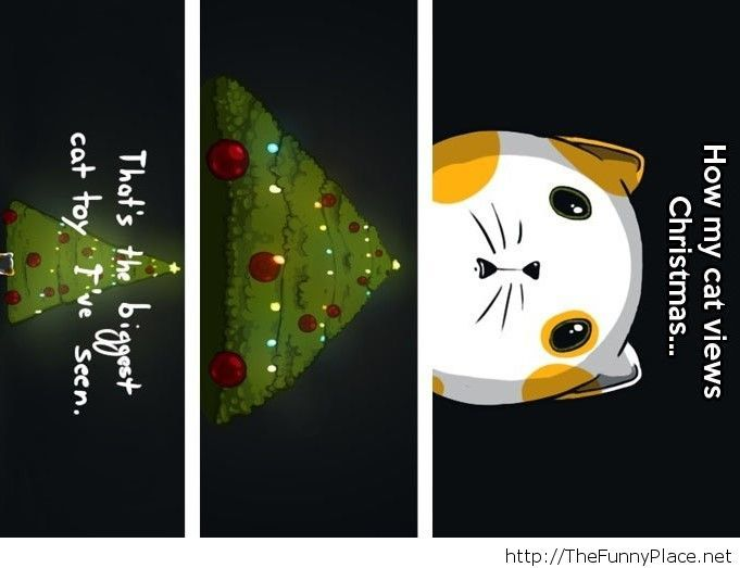 Why cats always attack Chrisrtmas trees