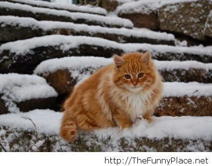 A cat that likes the winter Funny