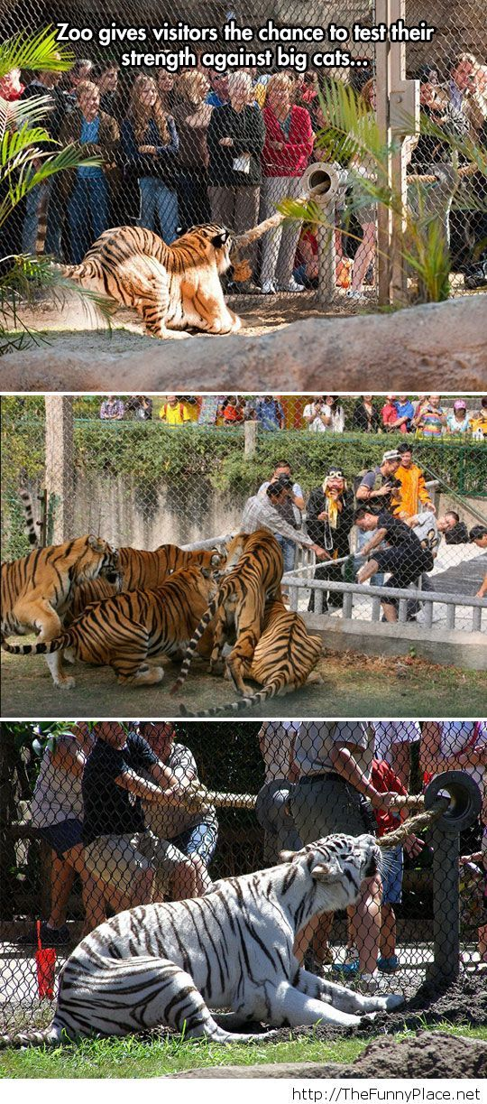 A war with the tigers