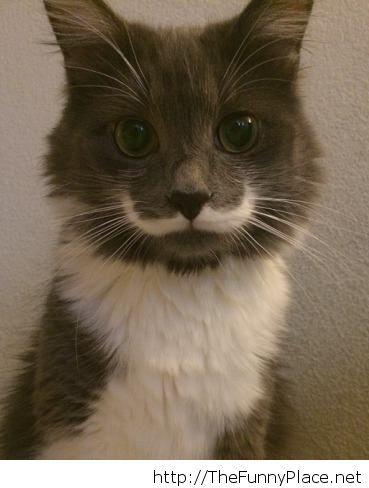 Best Mustache Ever