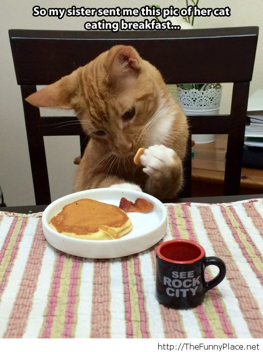Cat eating breakfast