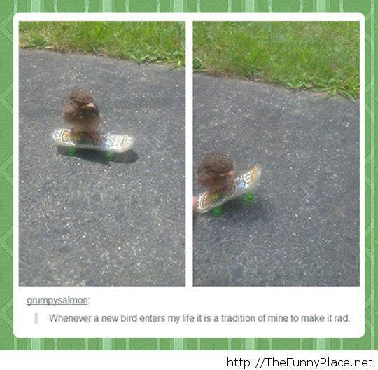 Funny skater bird