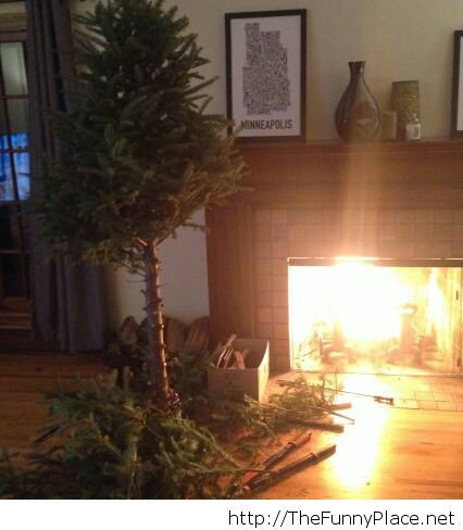 Getting rid of the Christmas tree – TheFunnyPlace