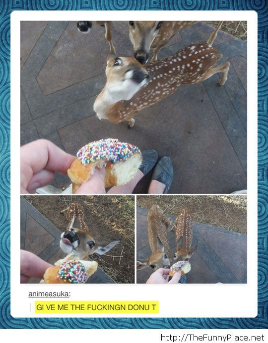 Give me the donut