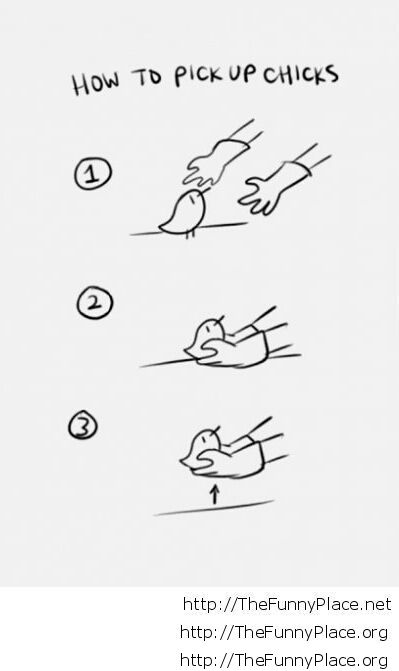 How to pick-up chicks