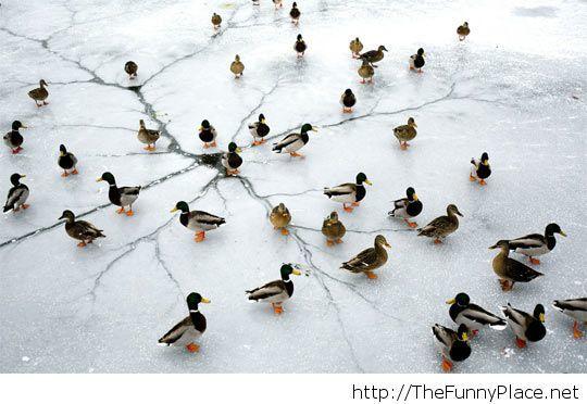 Quacks and cracks