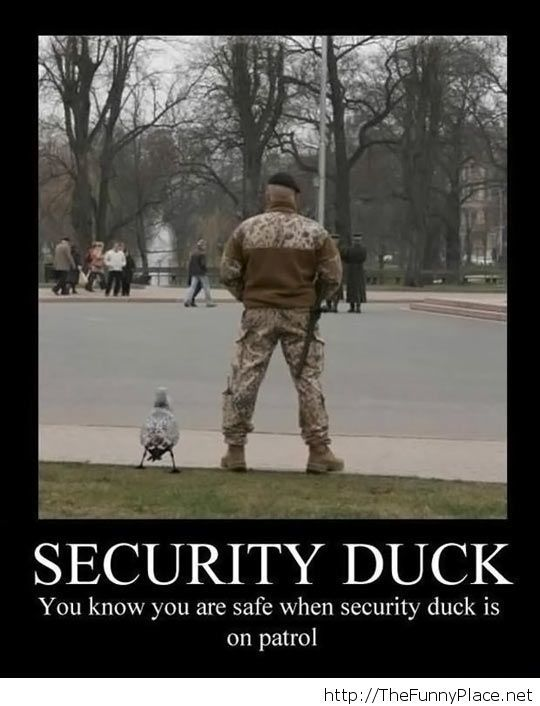 Security Duck on patrol...