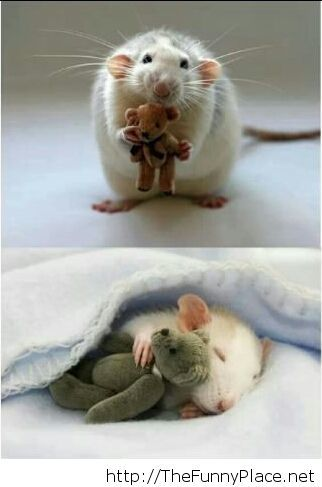 Teddy bears for mice
