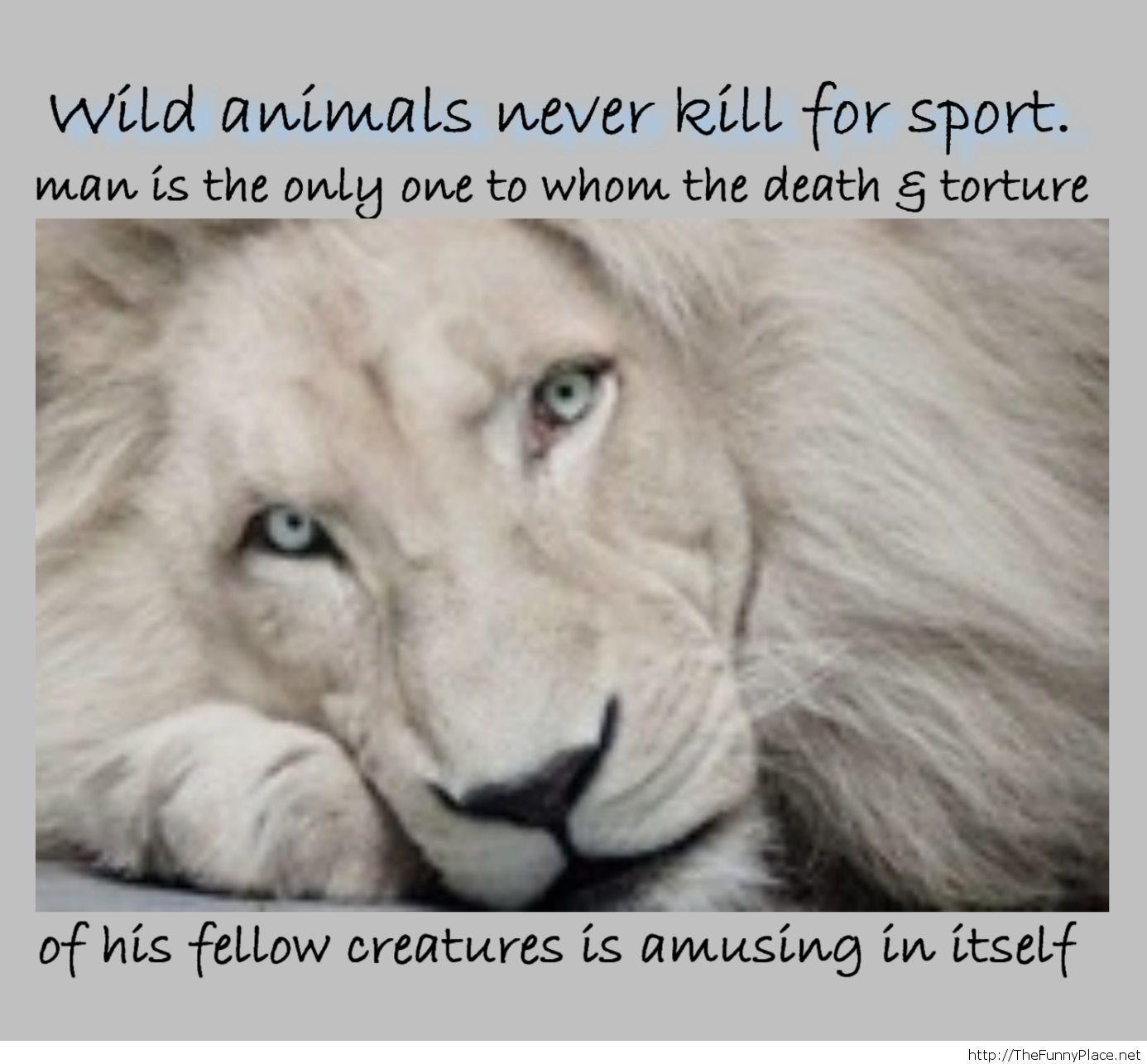 Wild animals never kill for sport