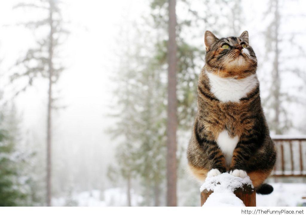Winter cat HD wallpaper funny