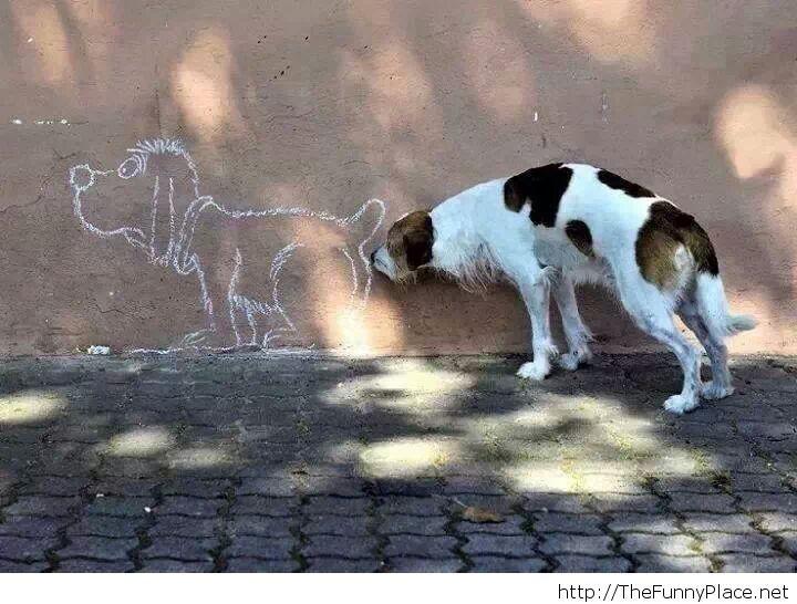 Dog curiosity