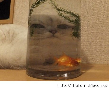 Funny cat face and fishes