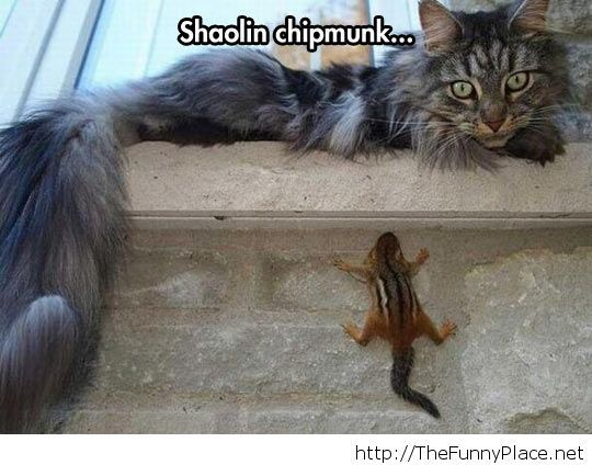 Funny chipmunk hiding