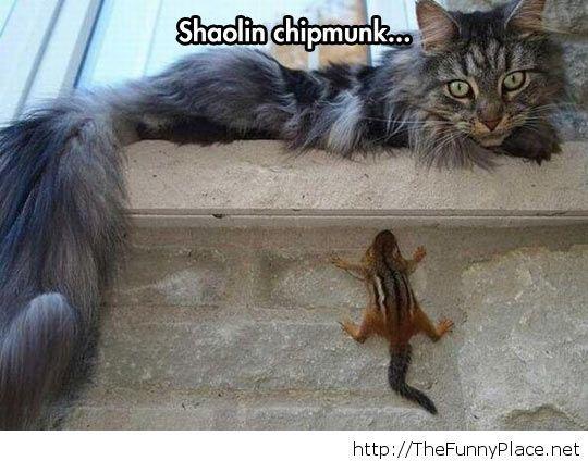 Funny chipmunk hiding
