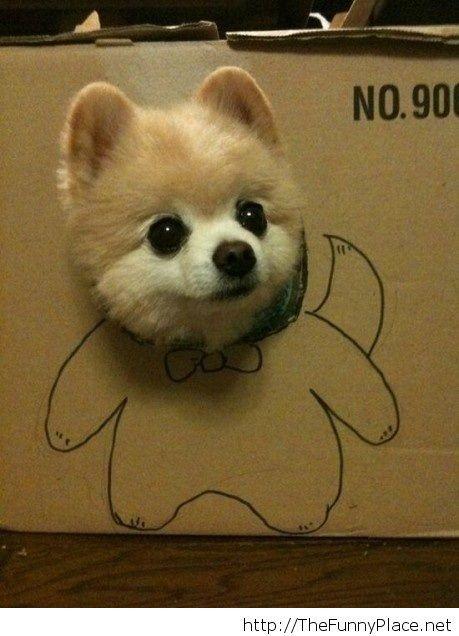 Funny dog face from cartoon