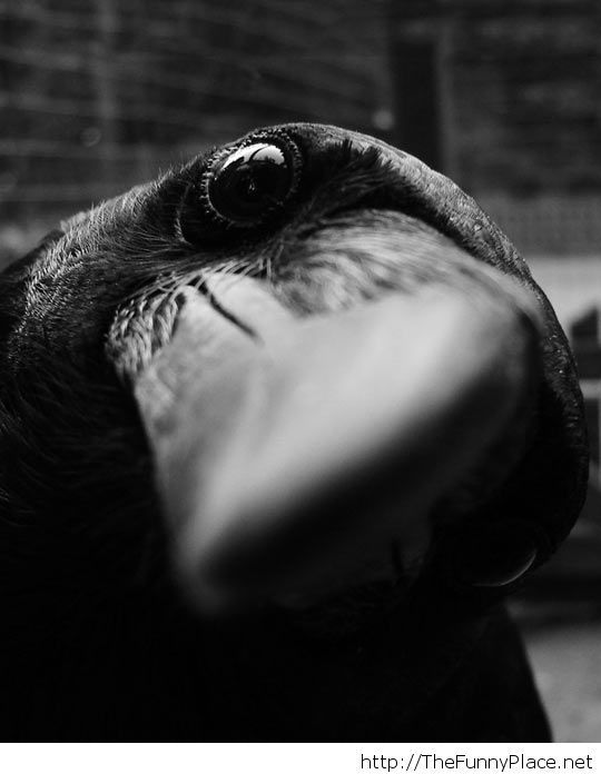 Just a curious crow...
