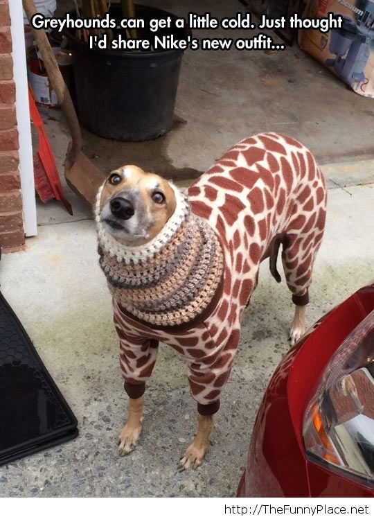 Keep him warm and fashionable