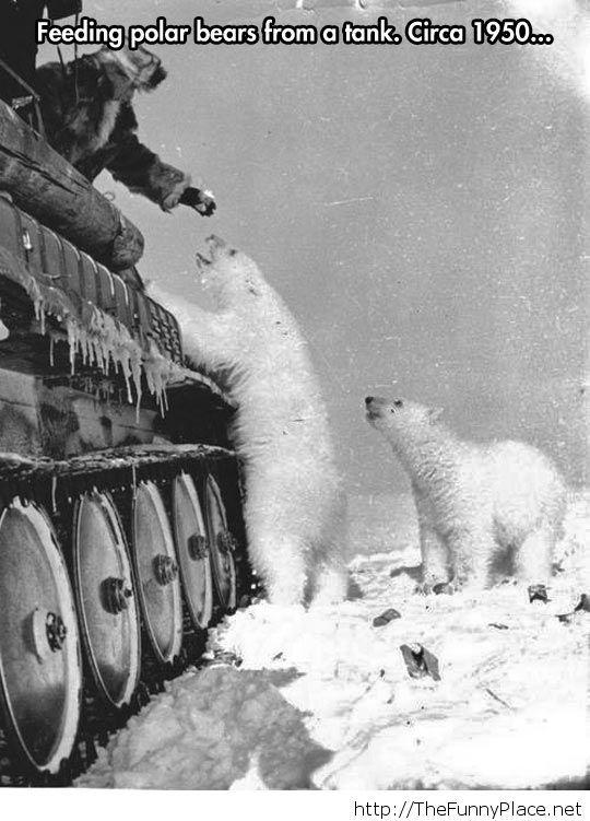 Russian soldier feeding polar bears