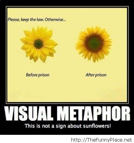 Visual metaphor