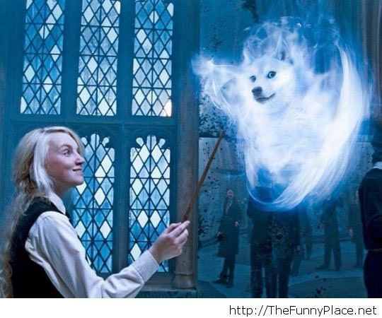Wow.Such Patronus.Very magic.