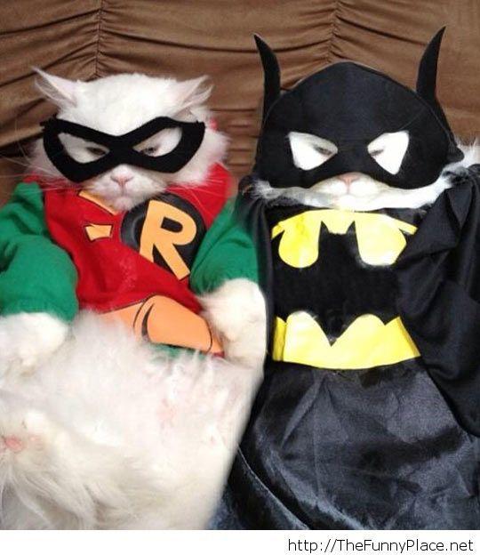 Catman And Purrobin