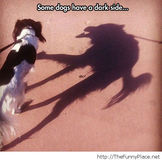 Dogs have a dark side too