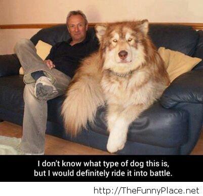 Enourmous dog
