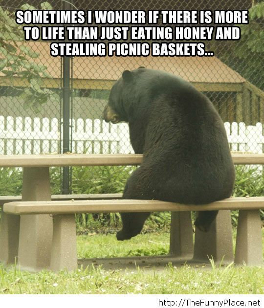 Existentialist bear...