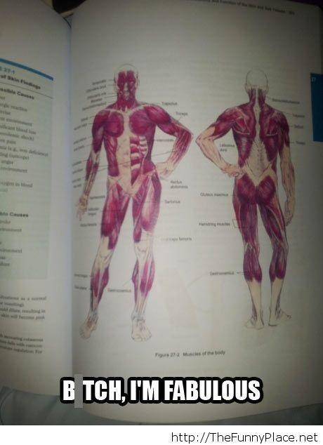 Fabulous anatomy