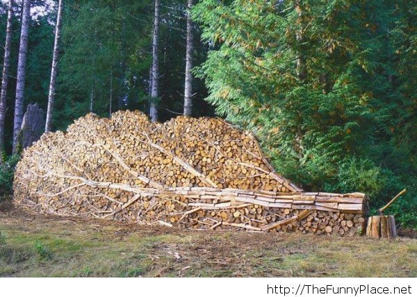 Firewood stacked to look like a tree